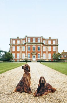Irish Setters strike a noble pose on the property of an equally impressive estate