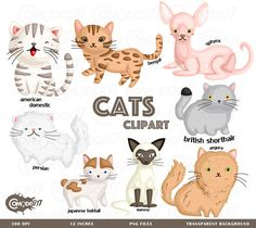 This listing is for 8 cute cats design elements. This digital clipart set is perfect for use in greeting cards, scrapbooking, party invitations, decorations, and more!!  - You will get 8 Digital Clip Art images in PNG format in 12 inches size - High Resolution of 300dpi - Watermark will not be on digital images purchased  *If you need any other format such as ai or eps feel free to send a message and we will be happy to help   TERMS OF USE-  • Commercial Use:  There are two options for…