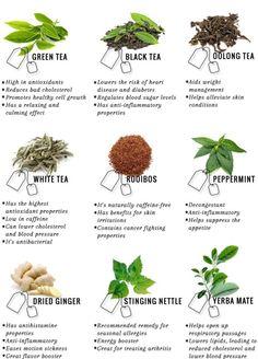 Medicinal-plants-herbs:Medicinal Tea Source by Healing Herbs, Medicinal Plants, Natural Healing, Crystal Healing, Magic Herbs, Herbal Magic, Natural Medicine, Herbal Medicine, Witchcraft Herbs