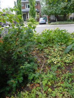 Toronto garden staging/fall garden cleanup in Mount Pleasant West/Davisville Gardening For Beginners, Gardening Tips, Gardening Services, Organic Farming, Organic Gardening, Toronto Gardens, Toronto Houses, Natural Pesticides, Mount Pleasant