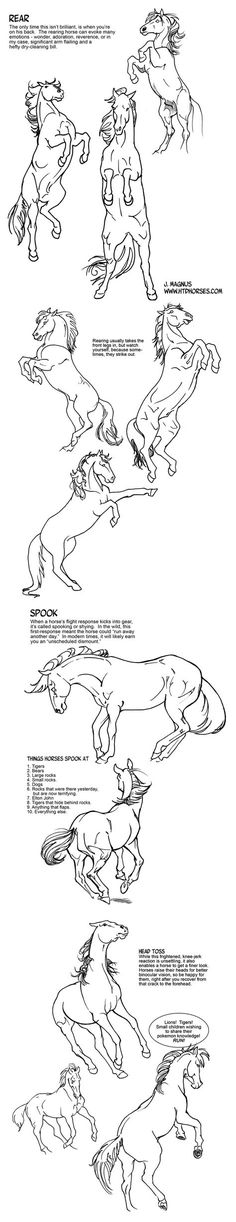 Horse Rearing and Spooking Tutorial by sketcherjak.deviantart.com on @deviantART