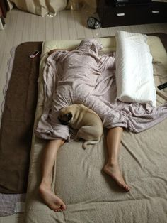 Typical night for any pug owner! OMG, this could be me! Hahaha.....;).    My pit bull does this!
