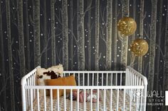 Golden color Birch Tree On Dark Grey Background with Stars Peel & Stick Wallpaper magical theme - wall decal - wall sticker
