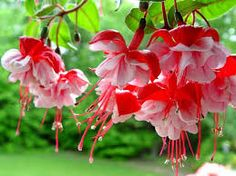 цветы - Google'da Ara