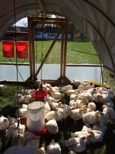"""""""Season-Extension Tips for Raising Pastured Poultry"""" Learn some tips on how to extend your growing season for pastured poultry! From MOTHER EARTH NEWS Magazine"""