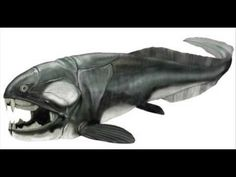 Dunkleosteus, an ancient primitive fish with markings like an orca in this depiction