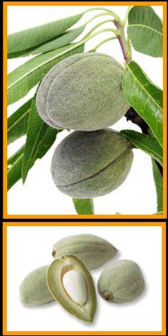 mandelfrukt - Google Search