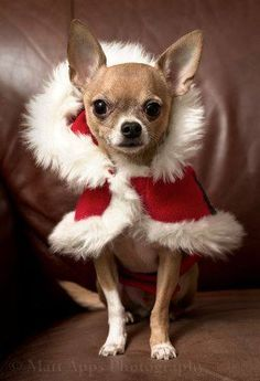 """""""I'm a Christmas dog in waiting, if you'll have me!"""""""