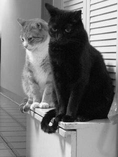 El Rúby con su hermano el Negrito