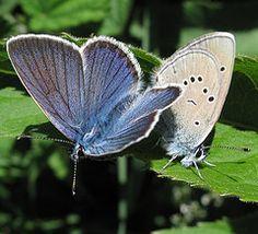 Butterflies are...