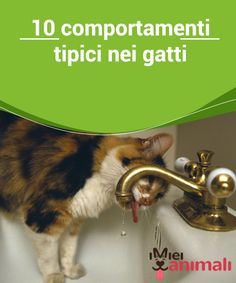 10 comportamenti tipici nei gatti   Chi possiede dei #gatti in casa avrà di certo notato il loro modo di agire talvolta #bizzarro. Tranquilli, sono soltanto dei #comportamenti tipici nei felini.  #Curiositá Love Pet, I Love Cats, Grumpy Cat, Animals And Pets, Pet Tips, Dogs, Elsa, Pet Grooming, Litter Box