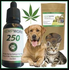 Pets benefit from cbd oil too! Great for pain, anxiety etc. www.hempworx.com/ladydi http://thehempoilbenefits.com