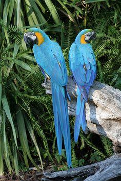 Twin Blue