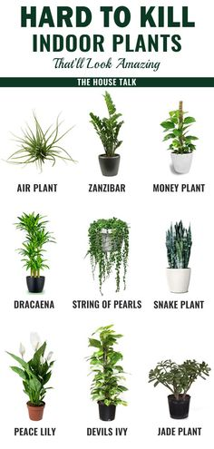 bathroom plants These are the BEST hard to kill indoor plants for my home. Glad to have found these amazing low maintenance houseplants for my house. These will surely look amazing. Pinning for later! Ficus, Plantas Indoor, Dulux Valentine, Jade Plants, Snake Plant, Decoration Plante, Inside Plants, Small Plants, House Plants Decor