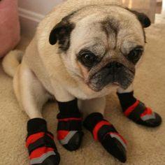 Pug Slippers 3