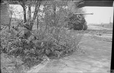 A camouflaged Sherman Firefly of the Irish Guards and infantry guard a section of the Bremen-Hamburg autobahn, 20 April 1945.