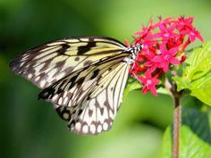Barry's camerawork at Fairchild Tropical Butterfly Garden!