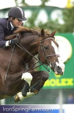 Photo Gallery of Conquest II Dutch Warmblood Stallion