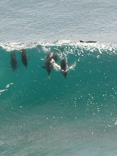 Dolphins surfing at