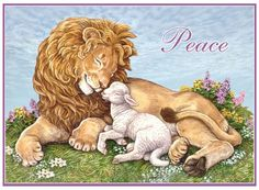 lion+and+lamb+images | Lion and Lamb Card