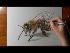 Drawing a realistic honey bee with ecoline, markers, pens and coloured pencils (time lapse video and drawing phases). 3d Drawings, Realistic Drawings, Animal Drawings, Colored Pencil Tutorial, Colored Pencil Techniques, Bee Drawing, Painting & Drawing, Drawing Lessons, Drawing Techniques
