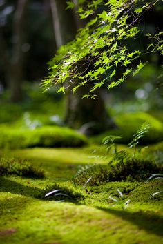"""""""Mossy Garden"""" - Sunlight streaming into the moss garden of Gio-ji in Kyoto, Japan [copyright: Yosuke Irie / dtd - Camera: Nikon Nikon DC] Forest Floor, Belle Photo, Shades Of Green, Mother Earth, Beautiful World, Beautiful Forest, Wonders Of The World, Nature Photography, Simplicity Photography"""