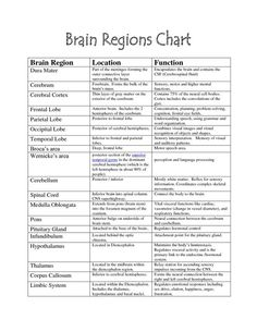 Human Brain Parts And Functions Diagram . Human Brain Parts And Functions Diagram Human Brain Diagram And Functions Lovely Brain Functions Chart Brain Ap Psychology, School Psychology, Speech Language Pathology, Speech And Language, Occupational Therapy, Speech Therapy, Aphasia Therapy, Physical Therapy Student, Cognitive Therapy