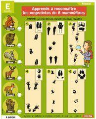 Apprends à reconnaitre les empreintes de 6 mammifères - Mon Quotidien, le seul site d'information quotidienne pour les 10-14 ans !