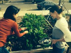 Foraging greens for grain salad with co-owner, Laina Brown