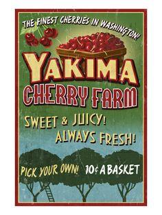 Yakima, Washington - Cherries