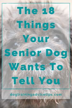 The 18 Things Your Senior Dog Wants To Tell You. #dogtrainingadvicetips #dogcare #doghealth #dogtips #dogs Basic Dog Training, Dog Training Videos, Feeling Unwanted, Pregnancy Guide, Dog Ages, Dog Language, Christmas Dog, I Love Dogs, To Tell