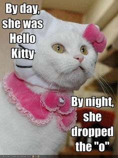 funnycatpictures | Source: http://icanhascheezburger.files.wordpress.com/2009/02/funny ...