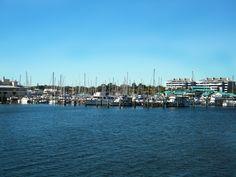 Florida's favorite live-aboard marina. Regatta Pointe Marina, Palmetto FL