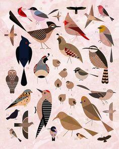 modosaurus:      Birds of the Sonoran Desert (by jeva jeva)