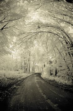 Not a huge fan of cold/winter/snow, but this shot is gorgeous. - Not a huge fan of cold/winter/snow, but this shot is gorgeous. Beautiful World, Beautiful Places, Beautiful Scenery, Winter Szenen, Winter Road, Winter Trees, Winter White, Snowy Trees, Winter Magic