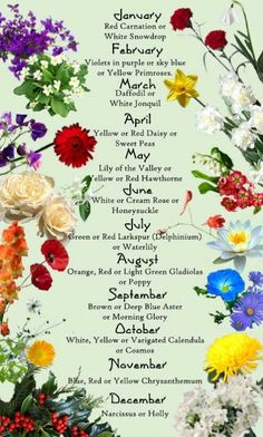 "Flowers and Their Meanings | was excited to learn the official ""birth month"""