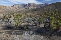 """Paiute Wilderness, Utah, flickr, mypubliclands (Bob Wick, BLM California) · great article about the 50th anniversary of the Wilderness Act that features 11 """"stunning American desert wilderness areas."""" · #photography #nature #desert"""