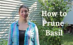 Learn how to prune your basil to help it grow big and strong!