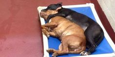 Moving Image Shows 2 Shelter Dogs Who Turned To Each Other For Love And Companionship