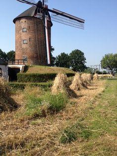 De Buitenmolen in Zevenaar op een mooie zomerse dag (26 juli 2012). via @anjavannorel.