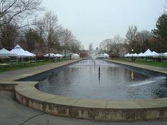 Canopies for Philadelphia's Cherry Blossom Festival