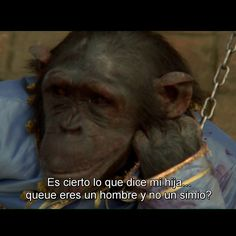 Monkey Bussiness