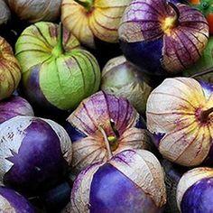 ***Neu Purple Tomatillo*** -Physalis ixocarpa- würzig für Salsa Mexicana 10 Samen