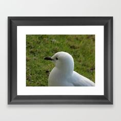 Seagull Framed Art Print by Moonshine Paradise #society6 #seagulls #birds #animals #prints