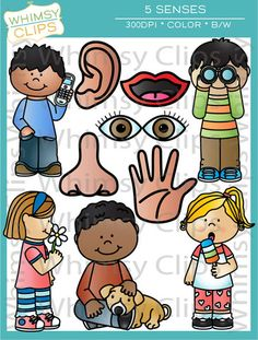 The 5 senses clip art set contains 20 image files, which includes 10 color images and 10 black and white images in png. All images are 300dpi for better scaling and printing.