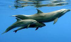 mlada delfina – Vyhľadávanie Google Adoption, Whale, Animals, Google, Dolphins, Wild Animals, Foster Care Adoption, Whales, Animales