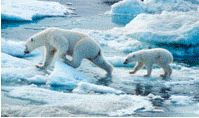 World Wildlife Fund. Wonderful, get-things-done conservation organisation.