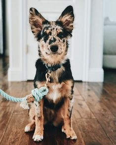 Before You Return That Rescue Dog To The Shelter… – Dogtime - Welpen Cute Dogs And Puppies, I Love Dogs, Doggies, Aussie Puppies, Pet Dogs, Puppies Tips, Cute Little Animals, Cute Funny Animals, Beautiful Dogs