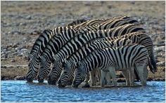 Out of Africa [28] - Aufgereiht - Bild & Foto von Annette He aus Natur - Fotografie (32584059) | fotocommunity