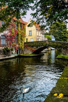Bruges, Belgium (by SdosRemedios)